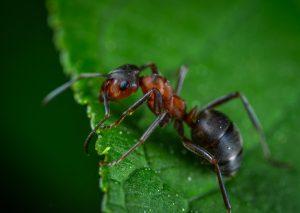 Už žiaden cigánsky mravec ani cigánska mora. Vedci žiadajú o pomoc pri zmenách urážlivých názvov hmyzu