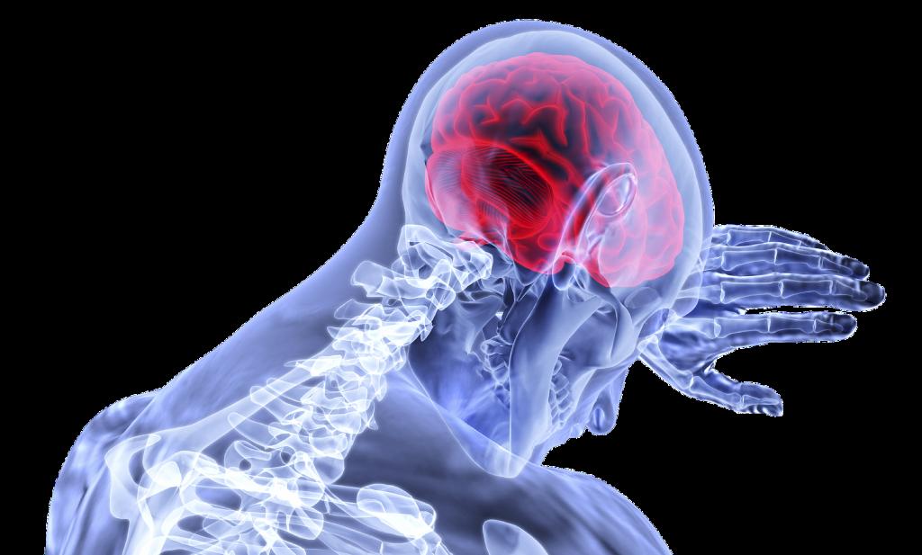 Nadmerné pozeranie televízie zmenšuje sivú hmotu v mozgu, hovorí americký výskum