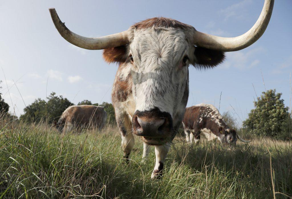 Znížte spotrebu mäsa, zakážte spaľovacie motory a zvýšte ceny nafty. A spravte to rýchlejšie, žiada nemecký úrad