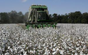 Za oblečenie si priplatíme. Cena bavlny je najvyššia za poslednú dekádu